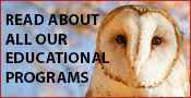 Horizon Wings' Educational Programs